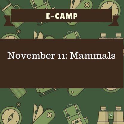 November 11: Mammals
